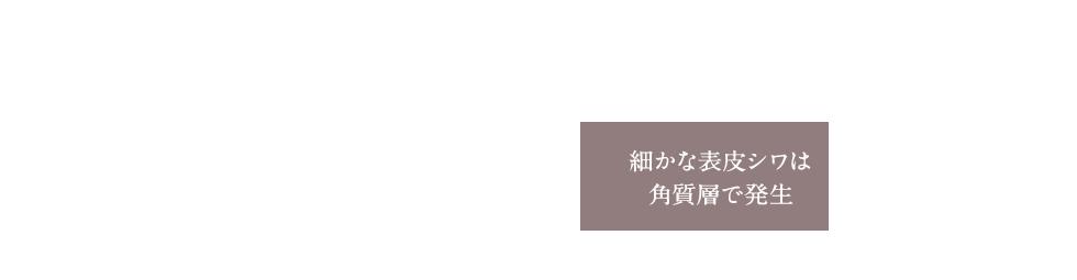 細かな表皮シワは角質層で発生
